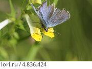 Бабочка. Стоковое фото, фотограф Юрий Груздев / Фотобанк Лори