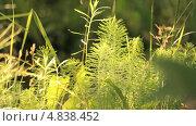 Купить «Кусты на солнце», видеоролик № 4838452, снято 24 июня 2013 г. (c) Юрий Александрович Балдин / Фотобанк Лори