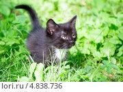 Котенок на зеленой траве. Стоковое фото, фотограф Анастасия Новикова / Фотобанк Лори