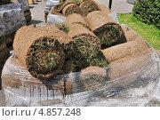 Купить «Рулонный газон (дерн) в парке», эксклюзивное фото № 4857248, снято 30 июня 2013 г. (c) Алёшина Оксана / Фотобанк Лори