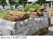 Купить «Рулонный газон (дерн)», эксклюзивное фото № 4857256, снято 30 июня 2013 г. (c) Алёшина Оксана / Фотобанк Лори