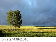 Купить «Береза после грозы», фото № 4862016, снято 23 июля 2010 г. (c) Андрей Логвинович / Фотобанк Лори