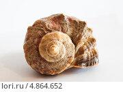 Морская ракушка. Стоковое фото, фотограф Иван Трошин / Фотобанк Лори