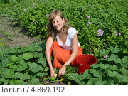Купить «Молодая женщина собирает огурцы с грядки», фото № 4869192, снято 24 июня 2013 г. (c) Ирина Борсученко / Фотобанк Лори