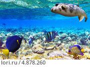Купить «Кораллы и рыбы в Красном море. Египет, Африка», фото № 4878260, снято 3 сентября 2012 г. (c) Vitas / Фотобанк Лори