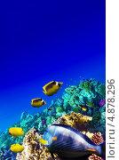 Купить «Кораллы и рыбы в Красном море. Египет, Африка», фото № 4878296, снято 8 сентября 2012 г. (c) Vitas / Фотобанк Лори