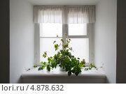 Купить «Лазающее растение на подоконнике», фото № 4878632, снято 14 октября 2012 г. (c) Виктория Ратникова / Фотобанк Лори