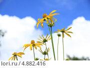 Цветы. Стоковое фото, фотограф Бакулин Николай / Фотобанк Лори