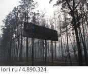 После пожара в лесу. Стоковое фото, фотограф Геннадий чупругин / Фотобанк Лори
