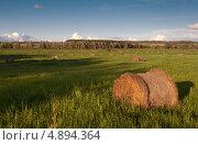 Зелёное поле со скатанными снопами сена и голубое небо. Вечерний свет. Стоковое фото, фотограф Alioshin.aleksey / Фотобанк Лори