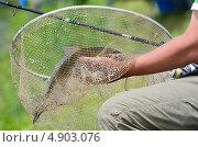 Купить «Большая рыба в сачке в руках рыбака», фото № 4903076, снято 30 июня 2013 г. (c) Наталия Евмененко / Фотобанк Лори