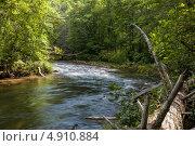 Горная река в лесу. Стоковое фото, фотограф Petro Shostak / Фотобанк Лори