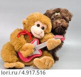 Купить «Собака породы Bolonka zwetna и игрушечная обезьяна», фото № 4917516, снято 29 июля 2013 г. (c) Vladimir Suponev / Фотобанк Лори