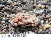 Большой коричневый камень лежит на серой гальке. Стоковое фото, фотограф Ольга / Фотобанк Лори
