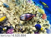 Купить «Кораллы и рыбы в Красном море. Египет, Африка.», фото № 4920884, снято 8 сентября 2012 г. (c) Vitas / Фотобанк Лори