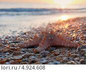 Купить «Морская звезда на закате на морском пляже», фото № 4924608, снято 4 сентября 2012 г. (c) Анна Мишина / Фотобанк Лори