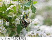 Любовь жуков. Для самых маленьких лето – это целая жизнь. Стоковое фото, фотограф Татьяна Скрипниченко / Фотобанк Лори