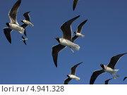 Чайки. Стоковое фото, фотограф Дмитрий Негру / Фотобанк Лори