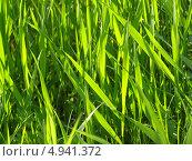 Трава. Стоковое фото, фотограф Константин Левада / Фотобанк Лори