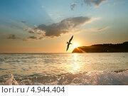 Закат на море и чайка. Стоковое фото, фотограф Вероника Конкина / Фотобанк Лори