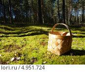 Пустое лукошко стоит на мху. Стоковое фото, фотограф Вадим Чурносов / Фотобанк Лори