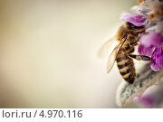 Пчела села на цветок. Стоковое фото, фотограф Олеся Головкина / Фотобанк Лори