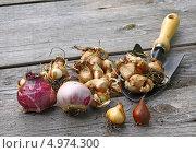 Купить «Посадка луковичных цветов», фото № 4974300, снято 5 августа 2013 г. (c) Олеся Сарычева / Фотобанк Лори