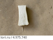 Срез ножки желчного гриба. Стоковое фото, фотограф Анна Романова / Фотобанк Лори