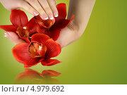 Женские руки держат цветы на зелёном фоне. Стоковое фото, фотограф O.Guerro / Фотобанк Лори