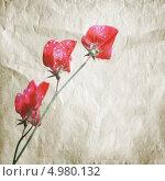 Купить «Розовые цветки душистого горошка (Lathyrus odoratus) на бумажной текстуре», фото № 4980132, снято 11 августа 2013 г. (c) EugeneSergeev / Фотобанк Лори