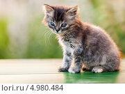 Купить «Маленький серый котенок», фото № 4980484, снято 13 августа 2013 г. (c) Илья Андриянов / Фотобанк Лори