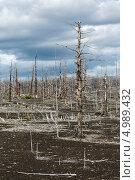 Купить «Мертвый лес, Большое трещинное Толбачинское извержение. Камчатка», фото № 4989432, снято 27 июля 2013 г. (c) А. А. Пирагис / Фотобанк Лори