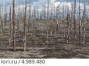 Купить «Мертвый лес, Большое трещинное Толбачинское извержение. Камчатка», фото № 4989480, снято 27 июля 2013 г. (c) А. А. Пирагис / Фотобанк Лори
