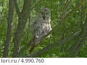 Сова сидит на ветке в лесу. Стоковое фото, фотограф Медведев Михаил / Фотобанк Лори