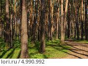 Купить «Сосновый бор», фото № 4990992, снято 12 мая 2013 г. (c) Алексей Голованов / Фотобанк Лори