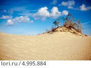 Купить «Песок и одинокое дерево на Куршской косе в Литве», фото № 4995884, снято 21 сентября 2012 г. (c) Анна Лурье / Фотобанк Лори