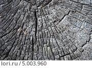 Горелое дерево. Стоковое фото, фотограф Леонид Замыцкий / Фотобанк Лори