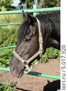 Купить «Голова лошади», эксклюзивное фото № 5017920, снято 17 августа 2013 г. (c) Юрий Морозов / Фотобанк Лори