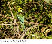 Зеленая птица сидит на ветке. Стоковое фото, фотограф Надежда Зверева / Фотобанк Лори