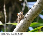 Бурундук на дереве. Стоковое фото, фотограф Надежда Зверева / Фотобанк Лори