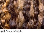 Натуральные человеческие волосы. Стоковое фото, фотограф Наталья Алексахина / Фотобанк Лори