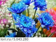 Цветы, букет. Стоковое фото, фотограф Зайцева Клавдия / Фотобанк Лори