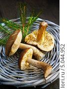 Купить «Грибы в плетеной корзине», фото № 5044952, снято 11 октября 2012 г. (c) ElenArt / Фотобанк Лори