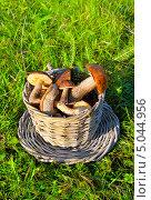 Купить «Грибы в плетеной корзине на траве», фото № 5044956, снято 11 октября 2012 г. (c) ElenArt / Фотобанк Лори