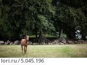 Купить «Жеребёнок на фоне деревьев», фото № 5045196, снято 29 августа 2013 г. (c) Nadya Pyastolova / Фотобанк Лори