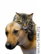 Кот и пес. Стоковое фото, фотограф юлия юрочка / Фотобанк Лори
