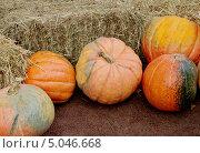 Купить «Оранжевые тыквы», фото № 5046668, снято 7 сентября 2013 г. (c) Илюхина Наталья / Фотобанк Лори