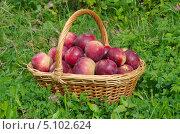 Купить «Корзина с красными яблоками на траве», эксклюзивное фото № 5102624, снято 13 сентября 2013 г. (c) Елена Коромыслова / Фотобанк Лори