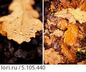 Купить «Дубовые осенние листья», фото № 5105440, снято 16 августа 2018 г. (c) Светлана Мамонтова / Фотобанк Лори