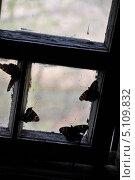 Бабочки на окне. Стоковое фото, фотограф Иван Иванов / Фотобанк Лори